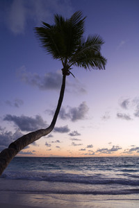 Palm tree silhouetted on the beach at sunset