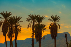 Palm trees against mountain at sunset