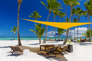 Palm trees along a tropical beach resort