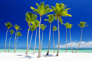 Palm trees along a tropical beach
