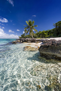 Palm trees and rocks on a tropical beach