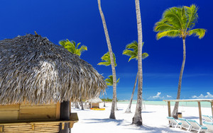 Palm trees at a tropical beach resort