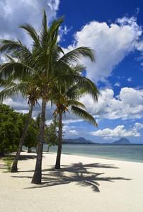 Palm trees on a tropical beach