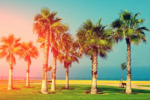 Palm trees on the embankment. Park near sea
