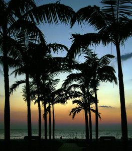 Palm Trees Silhouette At The Ocean