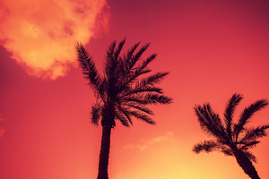 Palm trees silhouettes against sky at purple sunset light