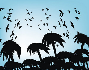 Palm Trees With Birds