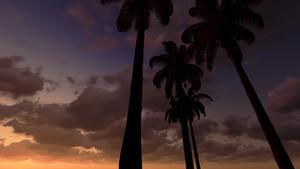 Palms In Moonlight