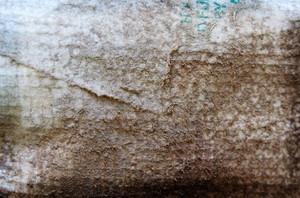 Paper Grunge Texture 19