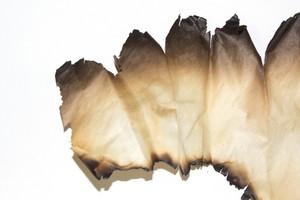 Paper Grunge Texture 82