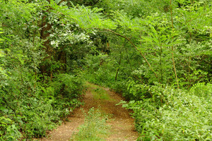 Path In The Green Forest