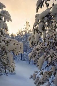 Path through a forest in heavy snow at sunset