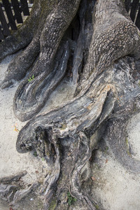 Pattern of tree root