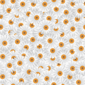 Pattern Of White Camomiles