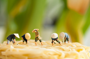 Peasants On Noodle Field