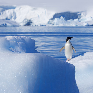 Penguin standing on a sunlit iceberg