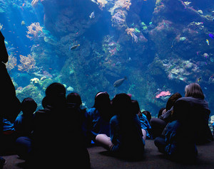 People Watching Aquarium