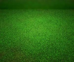 Perspectiv Grass Texture Stage Background