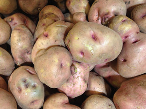 Peruvian Potato