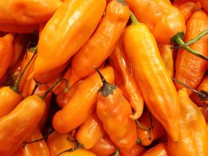 Peruvian Yellow Chili Pepper
