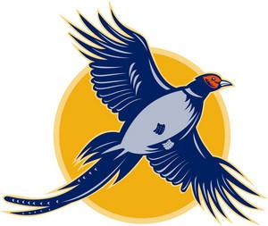 Pheasant Bird Flying