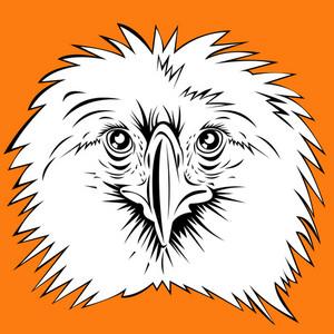 Philippine Eagle Head