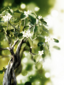 Photo Of Blossoming Tree Brunch With White Flower