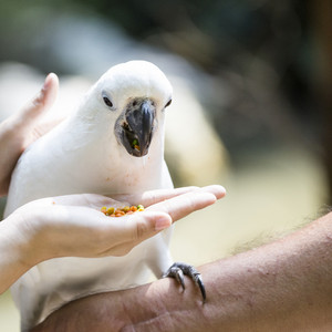 Picture of cockatoo at asian zoo