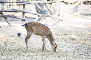 Picture of Deers at asian zoo
