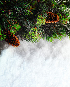 Pine tree and snow