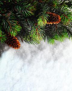Pine tree and snow