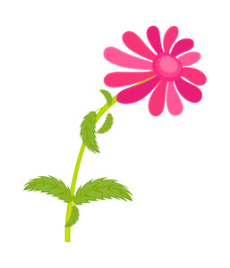 Pink Daisy Vector Element