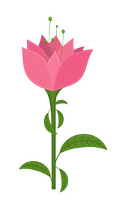 Pink Decorative Flower Illustration