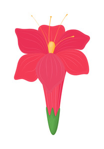 Pink Festival Daisy Design