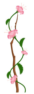 Pink Flower Branch Vector