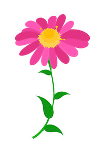 Pink Flower Design Element