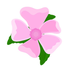 Pink Flower Element Drawing