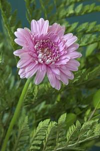 Pink Flower Plant