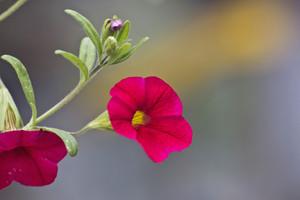 Pink Flower Twig