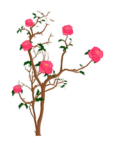 Pink Flowers Plant Design