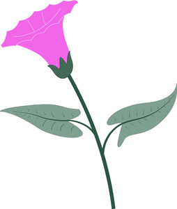 Pink Lily Flower Vector