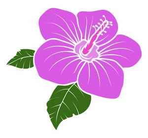 Pink Vector Daisy