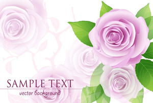 Pink Vector Roses On The White Background