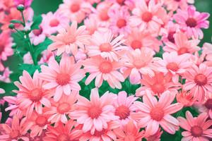 Pink vintage flowers