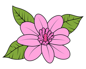 Pink Wild Daisy Vector Illustration