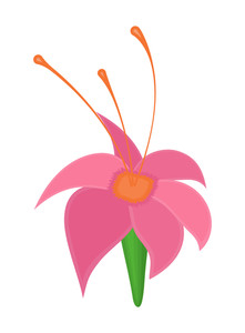 Pink Wildflower Drawing