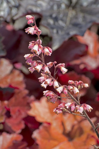 Pink Wildflowers Twig Image