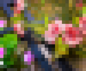 Pixel Backdrop