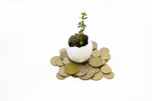 Plant And Money