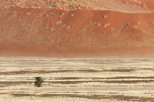 Plant growing in a rocky desert